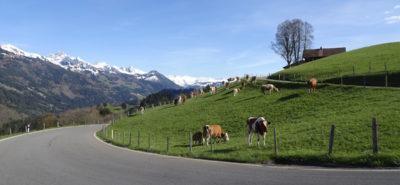 Venez tester une Triumph et découvrir de belles routes avec nous! :: Balade guidée en Suisse romande